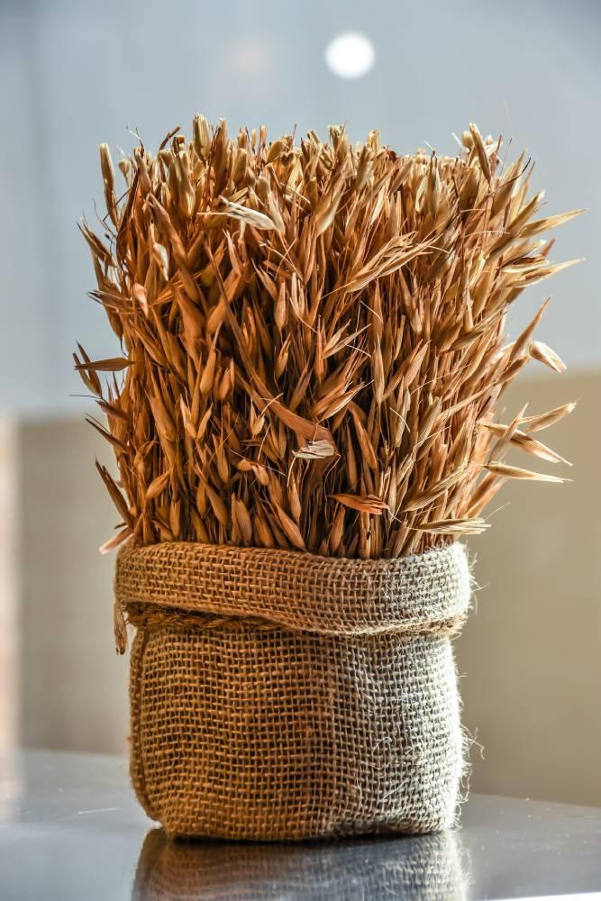 pšenice na vlasy