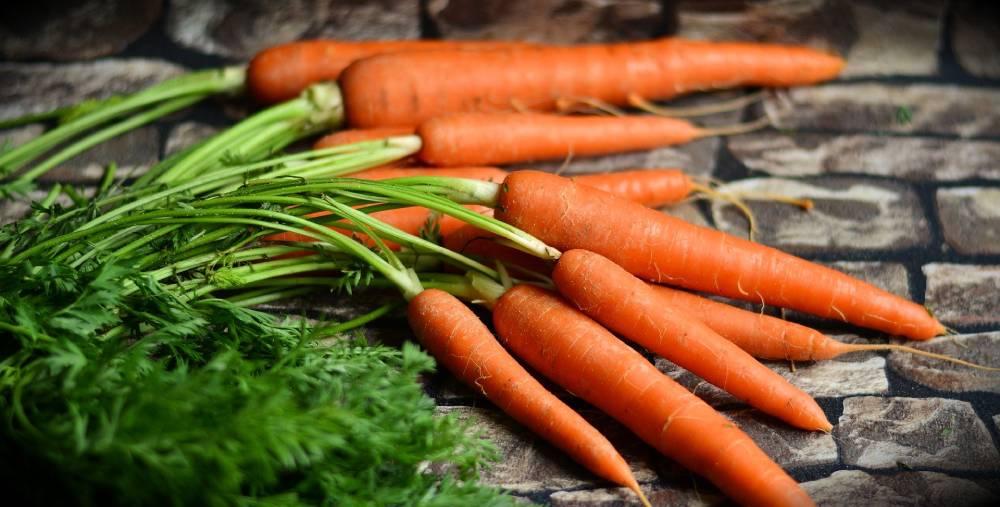 vitamín a mrkev